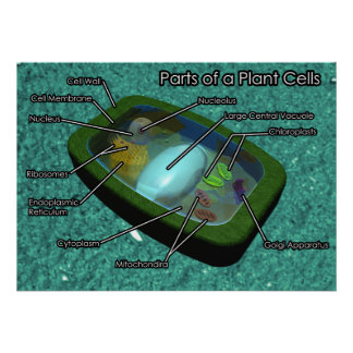 3D Plant Cell Diagram Poster