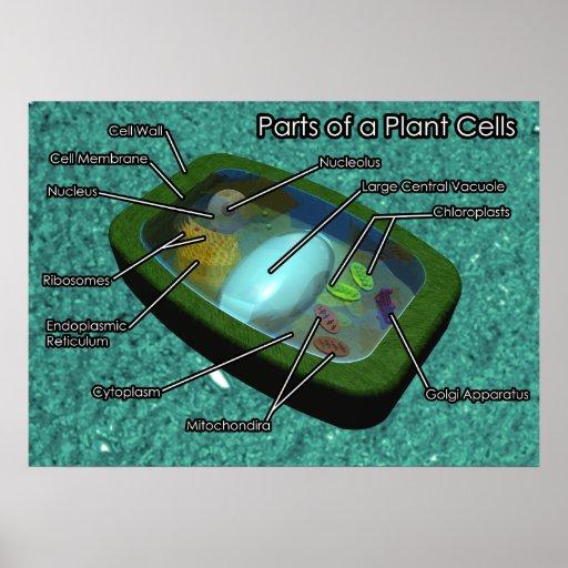 512 x 512 jpeg 65kB, 3D Plant Cell Diagram Poster | Zazzle