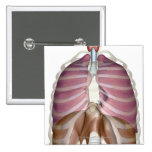 3d rendering of the respiratory system 2 inch square button