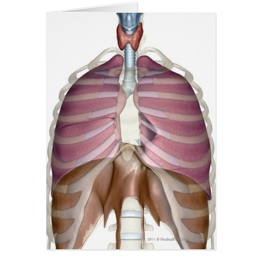 3d rendering of the respiratory system greeting card