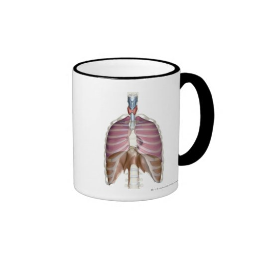 3d rendering of the respiratory system ringer coffee mug