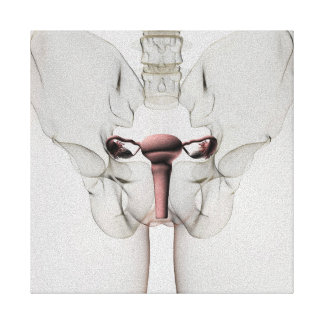 3D View Of Female Reproductive System Canvas Print