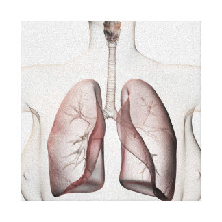 3D View Of The Female Respiratory System 1 Canvas Print