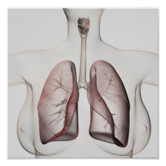 3D View Of The Female Respiratory System 1 Poster