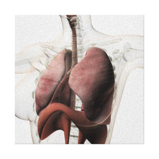 3D View Of The Female Respiratory System 3 Canvas Print