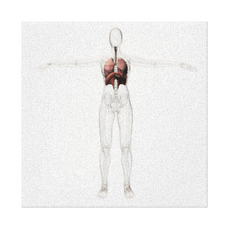 3D View Of The Female Respiratory System Canvas Print