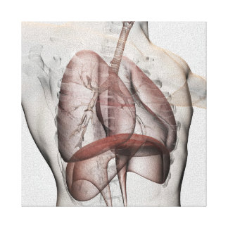 3D View Of The Male Respiratory System Canvas Print
