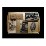 3D White Sturgeon Collage Post Cards