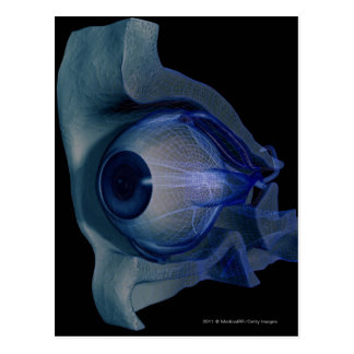 3d wireframe of the eye muscles in a socket postcard