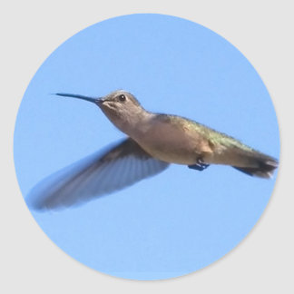 3J2 Hummingbird in a Blue Idaho Sky Classic Round Sticker