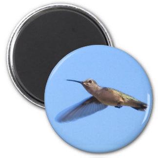 3J2 Hummingbird in a Blue Idaho Sky Magnet