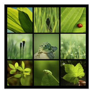 3x3 green nature photos Print