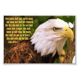 40:30 de Isaías - 31 con Eagle calvo Fotos