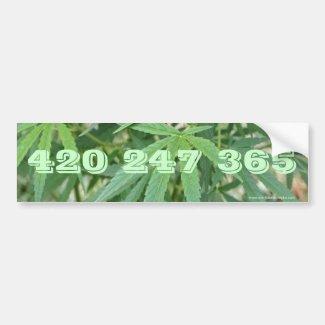 420 247 365 Bumper Sticker