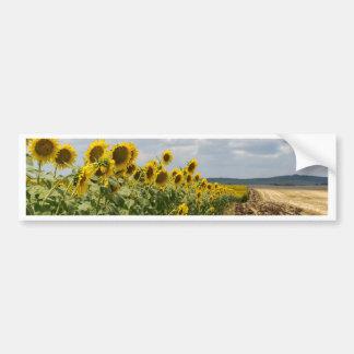 4410-Sunflower_field.jpg Pegatina Para Auto
