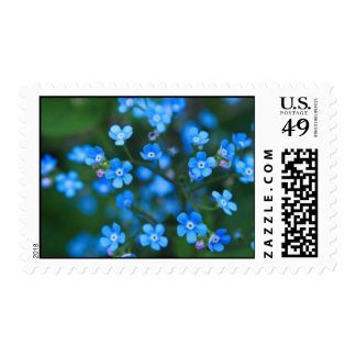 44 Cent Stamp - Alaska State Flower