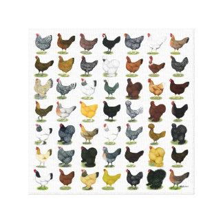 49 Chicken Hens Canvas Print