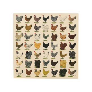 49 Chicken Hens Wood Print