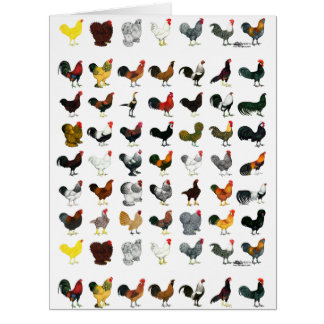 49 Roosters Card