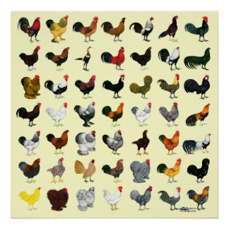 49 Roosters Print