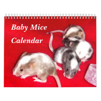 4 Baby Variegated Mice Growing Up Calendar
