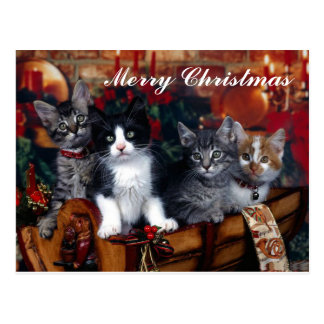 4 Cats Merry Christmas Post Card