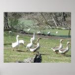 4 de marzo el _Park Ducks #2 Posters