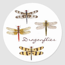 4 Dragonflies Classic Round Sticker