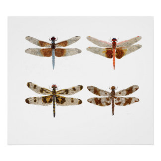 4 Dragonfly Studies in Watercolor Poster