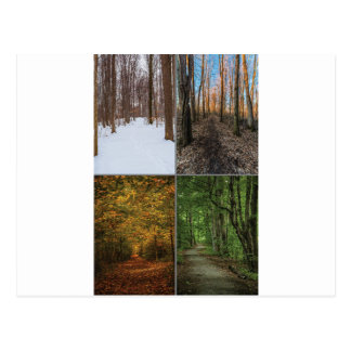 4 estaciones en la arboleda sagrada tarjetas postales
