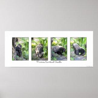 4 imágenes de un gorila posters