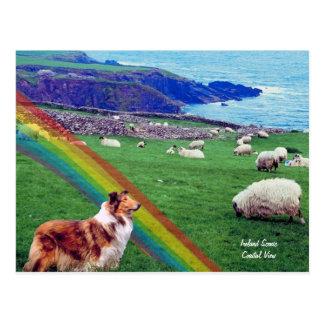 4.  Ireland Coast,  Collie & Flock of Sheep Postcard