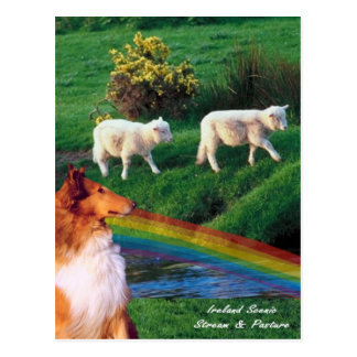 4.  Ireland Stream with Collie and Sheep Postcard
