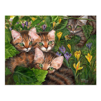 4 Kittens Crocus Postcard
