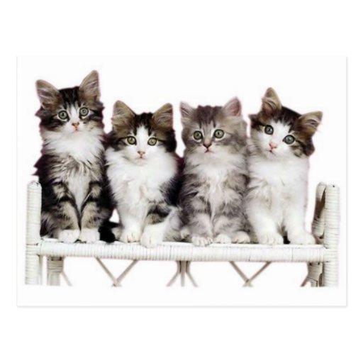 4 kittiens on a bench postcard