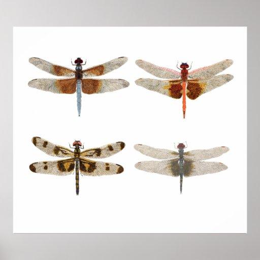 4 libélulas en lona póster