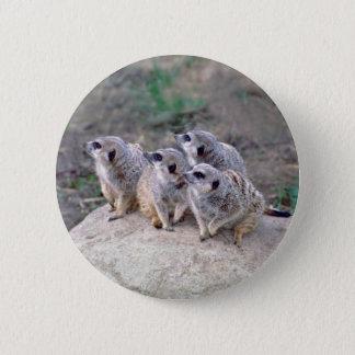 4 Meerkats Looking Left Button