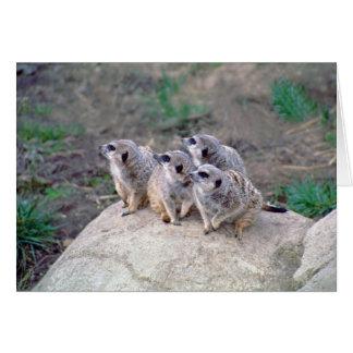 4 Meerkats Looking Left Note Card