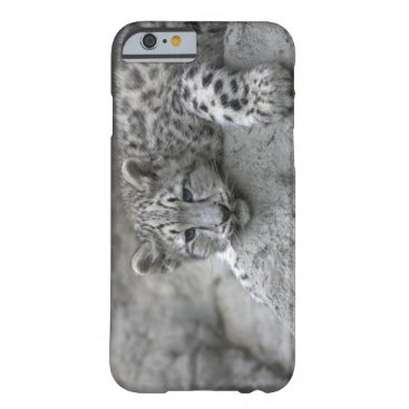 USA Themed 4 month old Snow leopard cub draped over a rock Barely There iPhone 6 Case