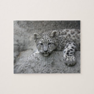 4 month old Snow leopard cub draped over a rock Jigsaw Puzzle