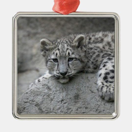 4 month old Snow leopard cub draped over a rock Metal Ornament
