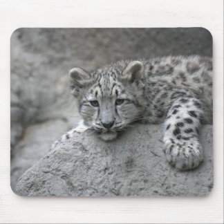 4 month old Snow leopard cub draped over a rock Mousepads