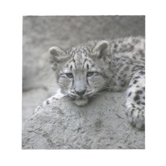 4 month old Snow leopard cub draped over a rock Notepad