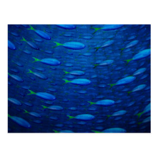 4 subacuáticos tarjeta postal