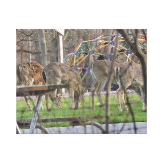 4 the Deer Canvas Print