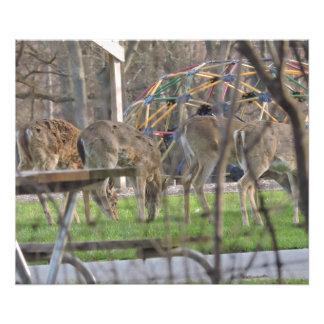 4 the Deer Photo Print