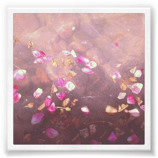 4 x 4 impresión de Instagram Pétalos de la flor Fotografias