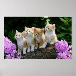 4 yellow kittens print