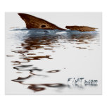 4ft Reflections of Redfish Poster