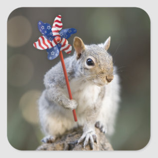 4th of July Patriotic Squirrel Stickers at Zazzle